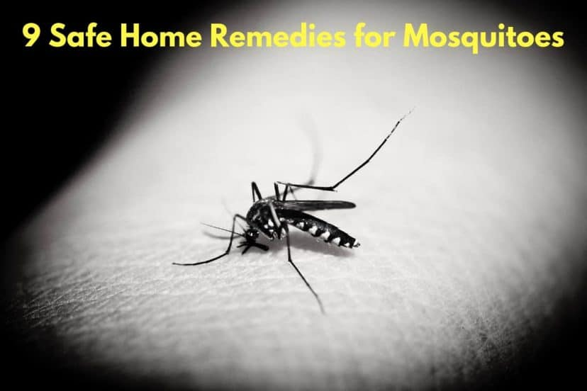 9 Safe Home Remedies For Mosquitoes (Prevent Bites)