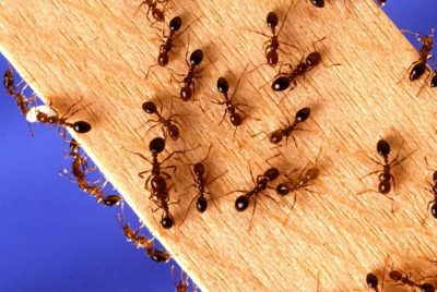 Diy Ant Control Guide