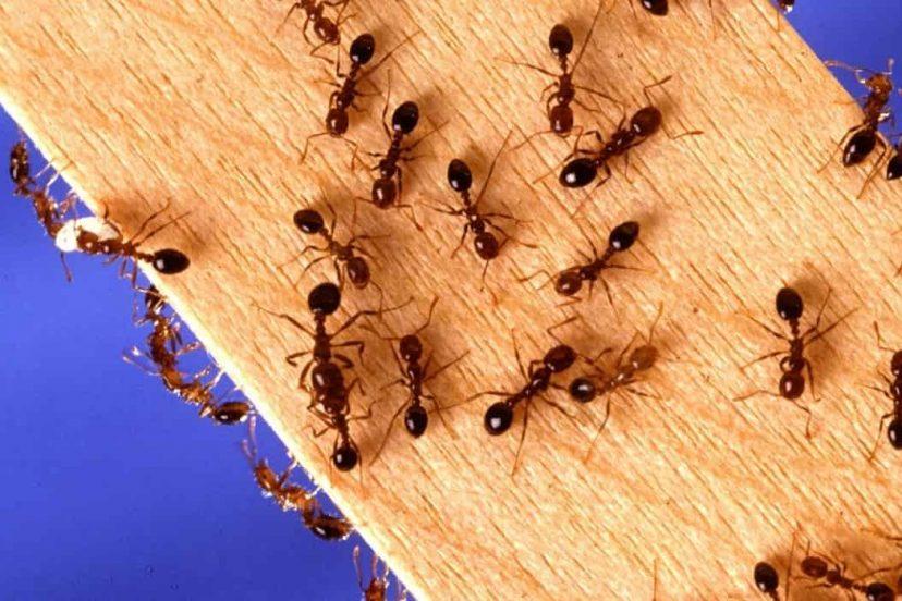 Diy Ant Control