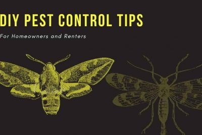 Diy Pest Control Tips For Homeowners And Renters