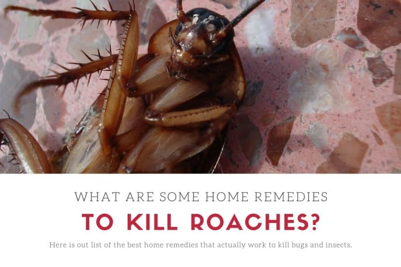 What Are Some Home Remedies To Kill Roaches And Cockroaches?