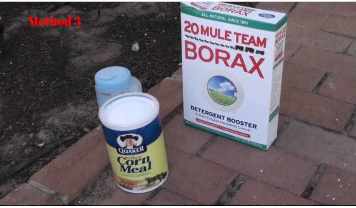 How to use borax to kill ants