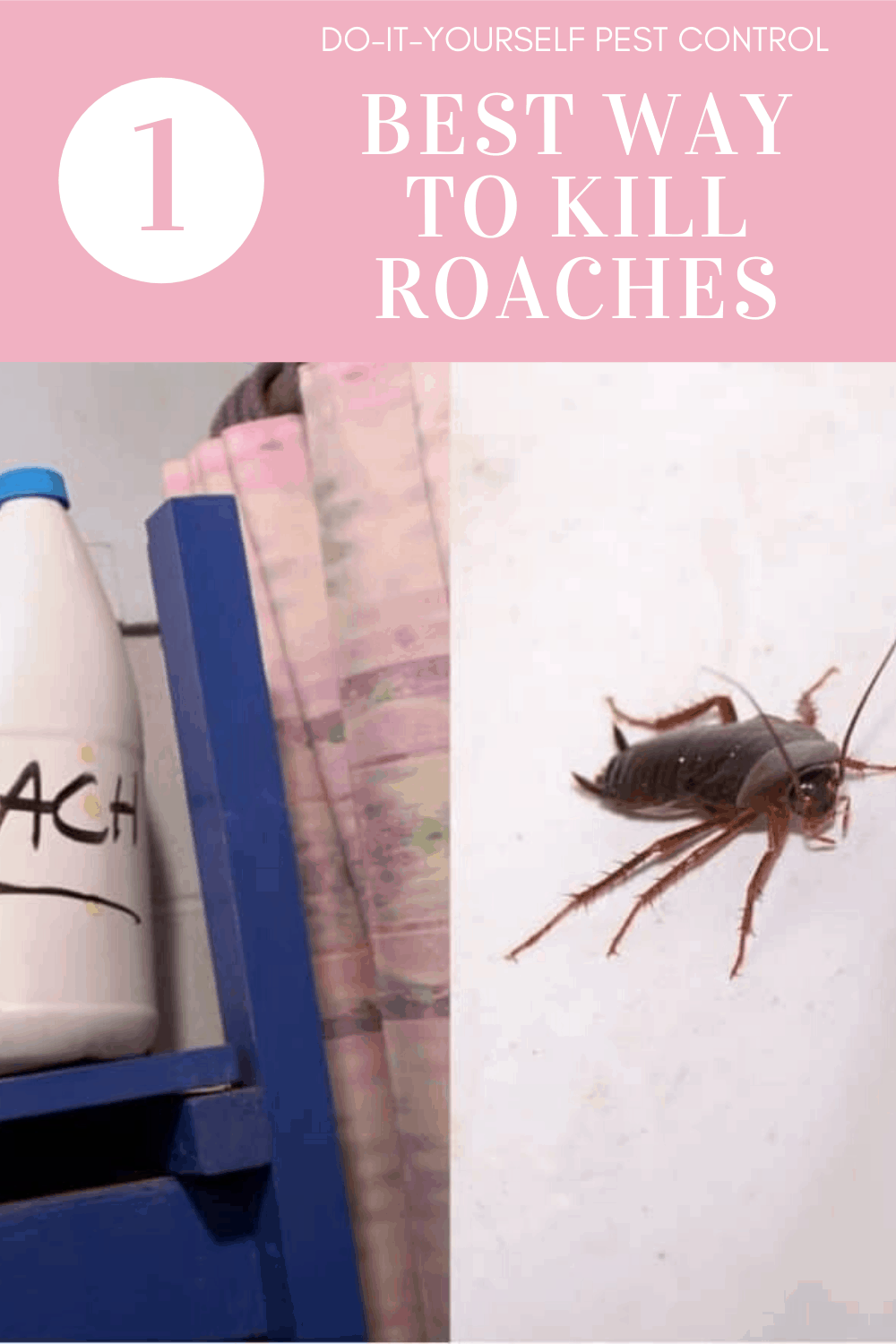 best way to kill roaches