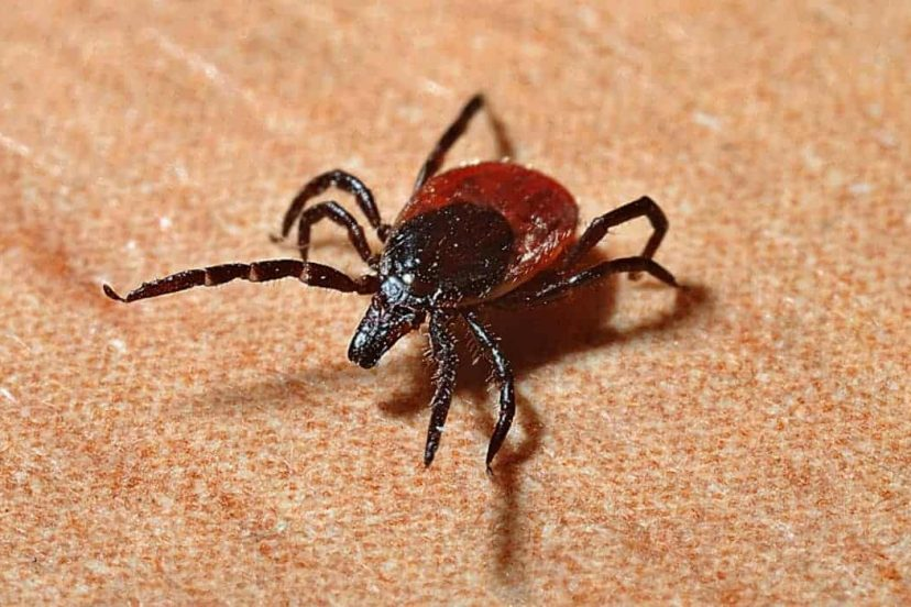 Is Boric Acid Safe For Pest Control Use Around The Home?