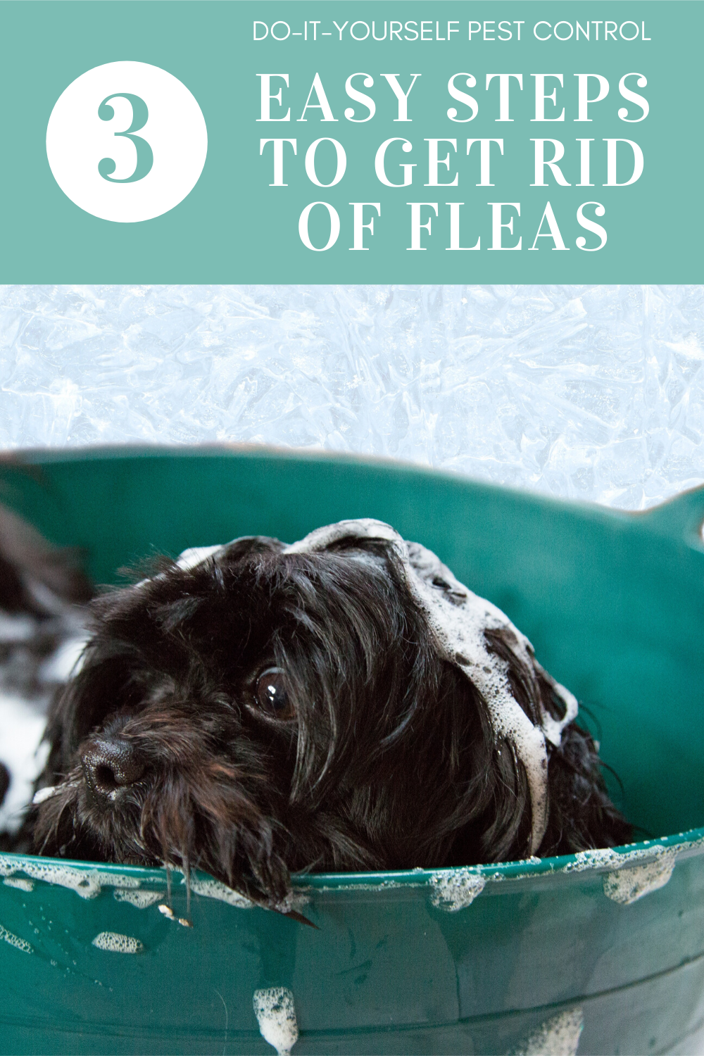 flea bath to remove fleas