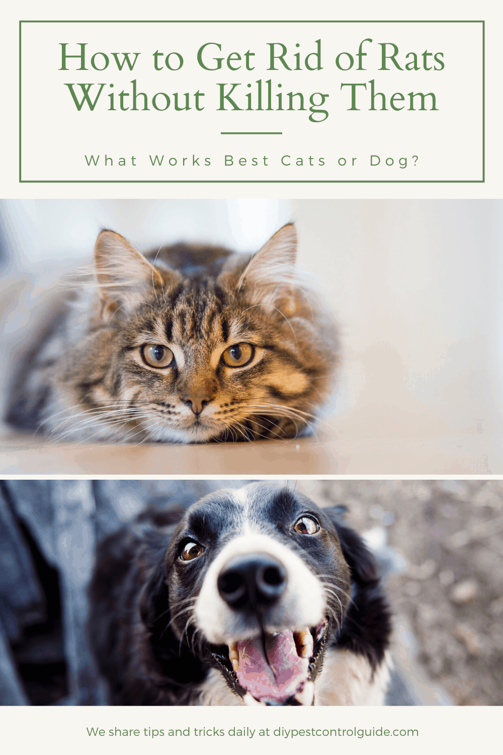 get rid of rats with cats and dogs