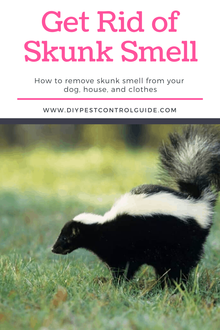 skunk smell