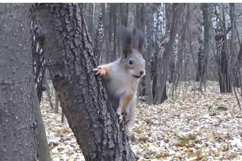 Why Do Squirrels Eat Meat? Are They Meat Eaters Or Vegetarians?