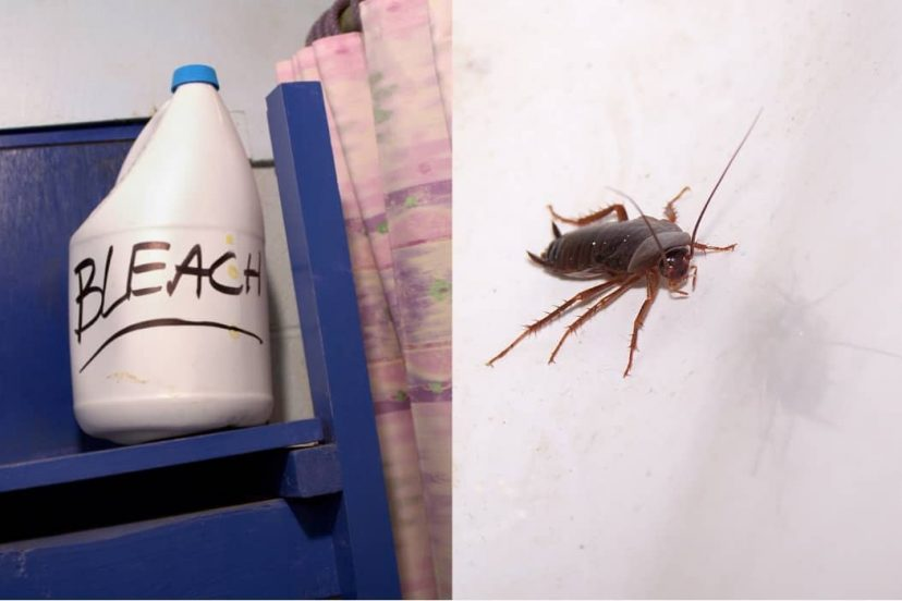 Can You Get Rid Of Cockroaches With Bleach? – DIY Pest Control