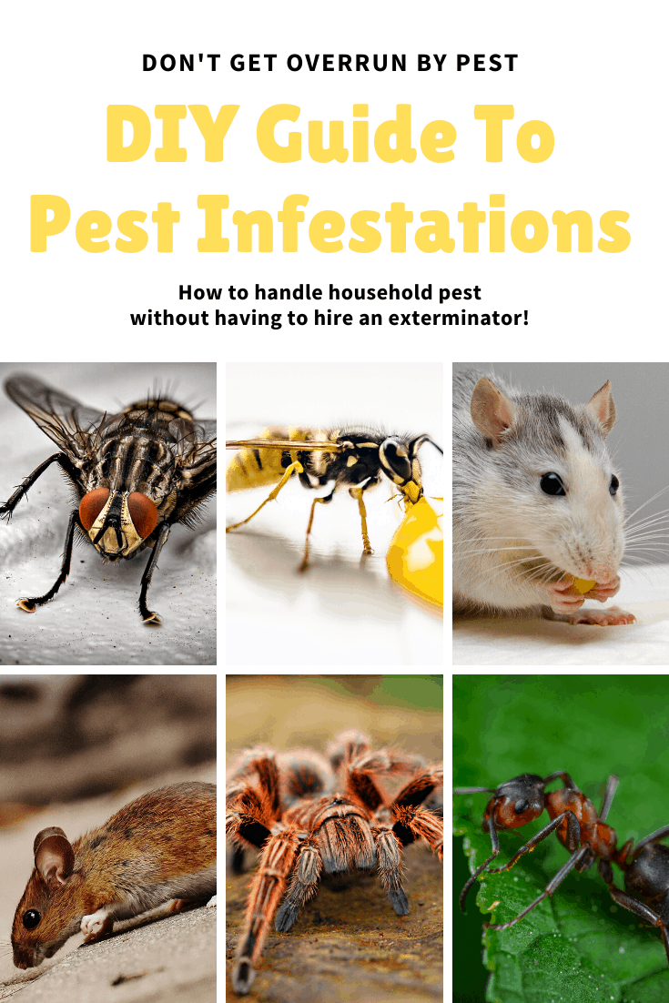 pest infestations