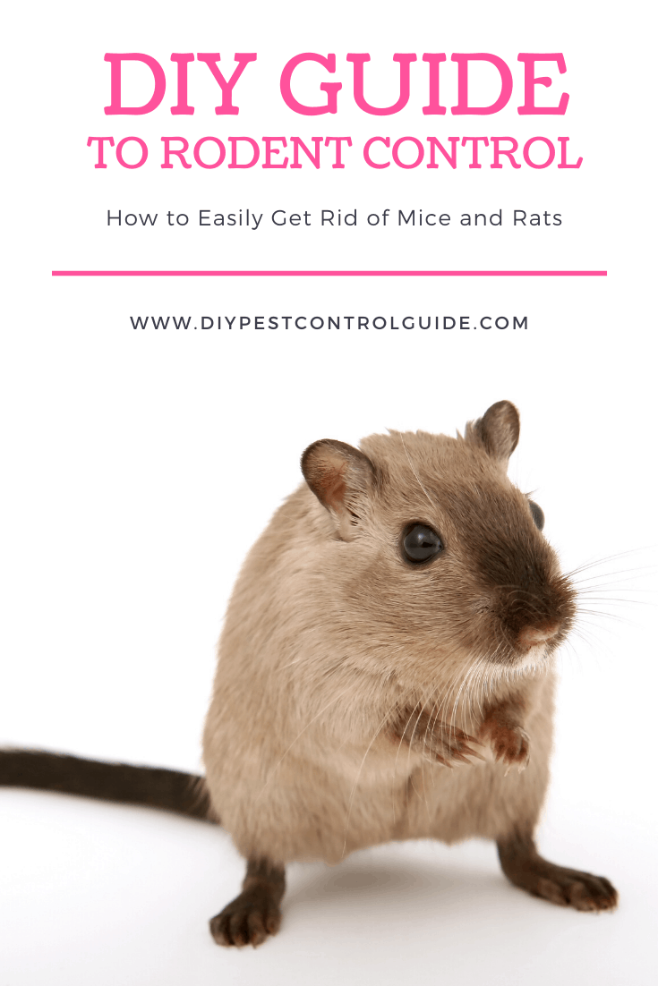 easily get rid of mice and rats