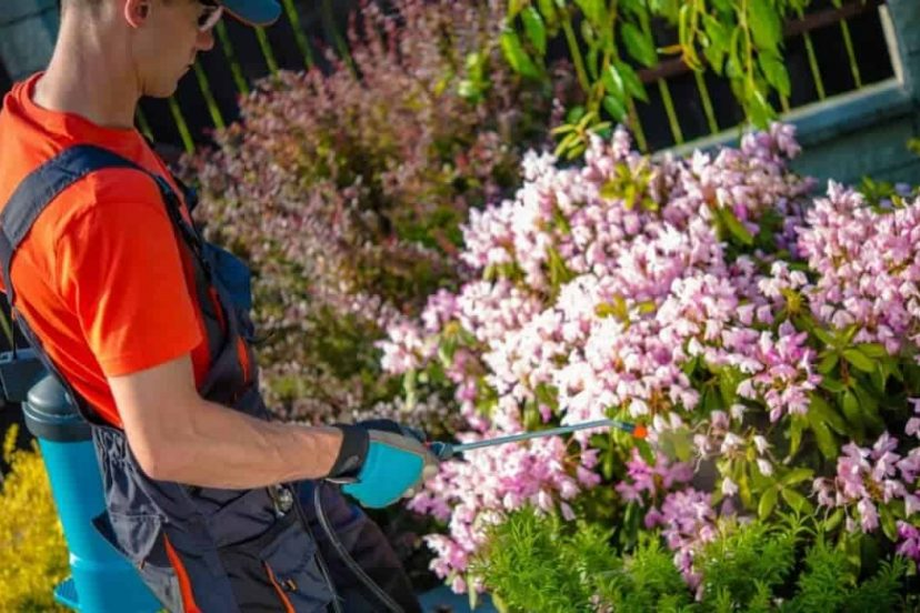 The Best Organic Pest Control Methods For Your Garden