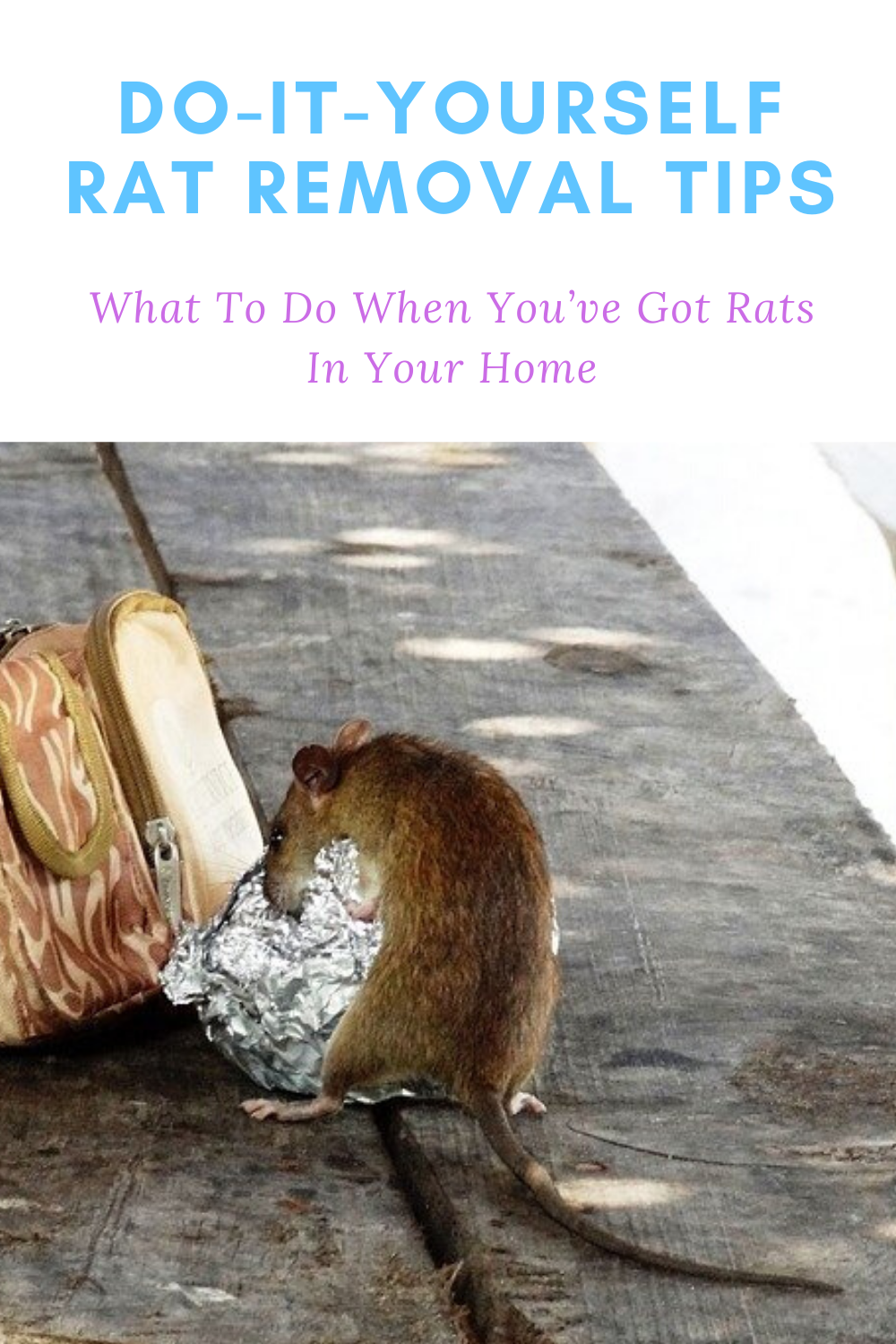 diy rat removal tips