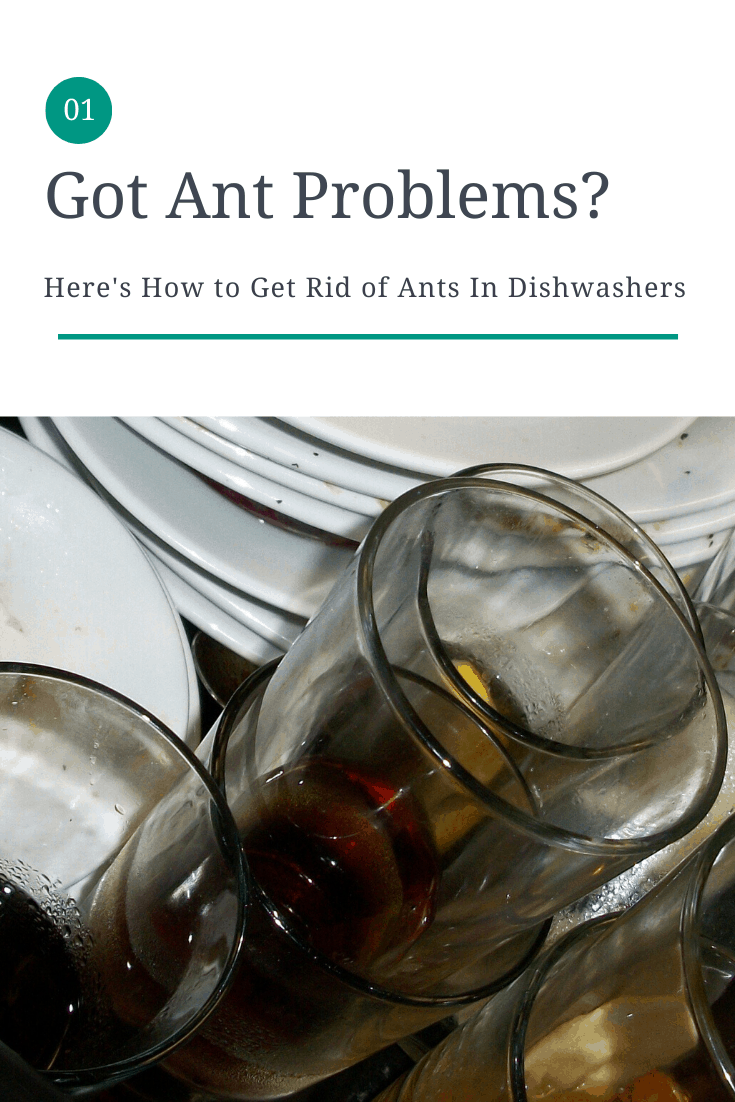 get rid of dishwasher ants