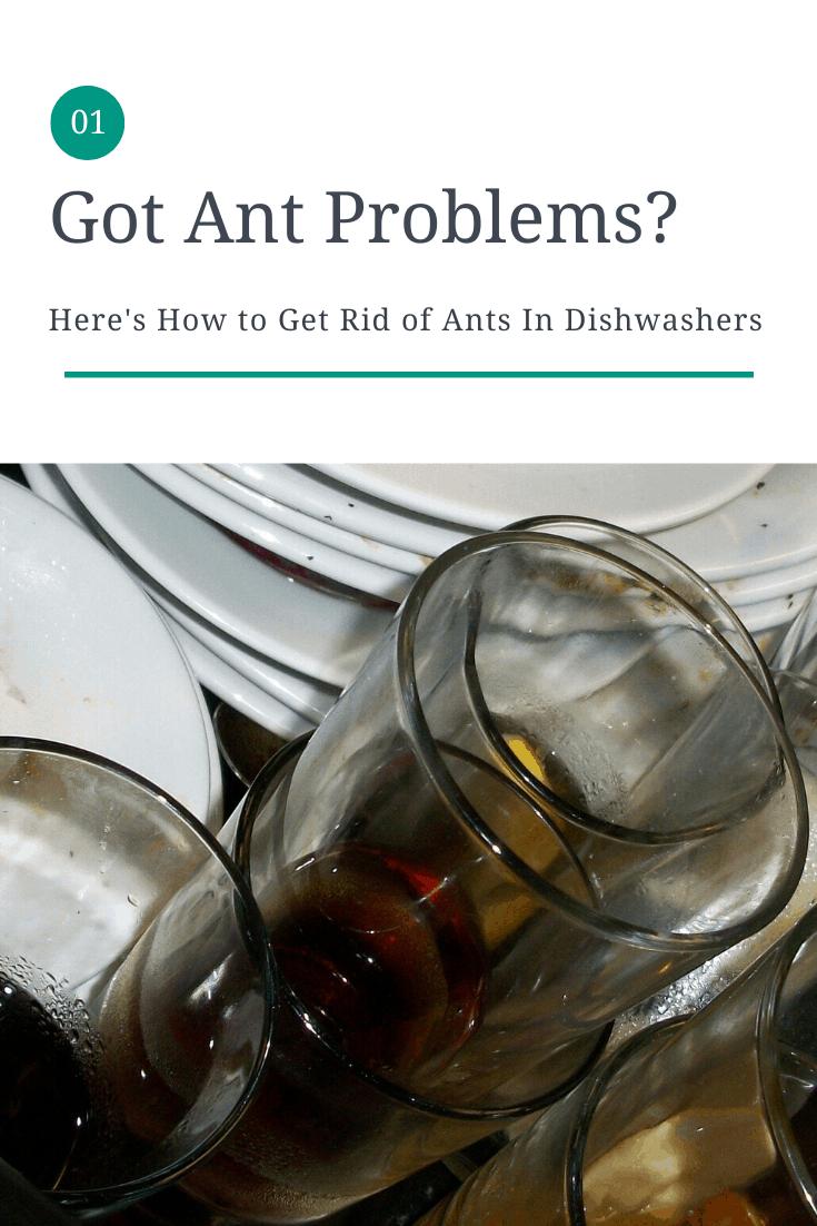 get rid of dishwasher ants