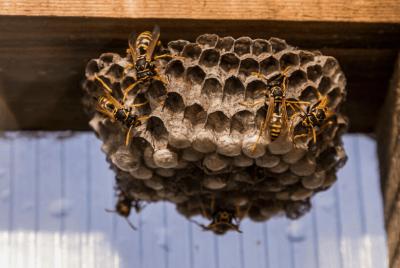Homemade Wasp Killer
