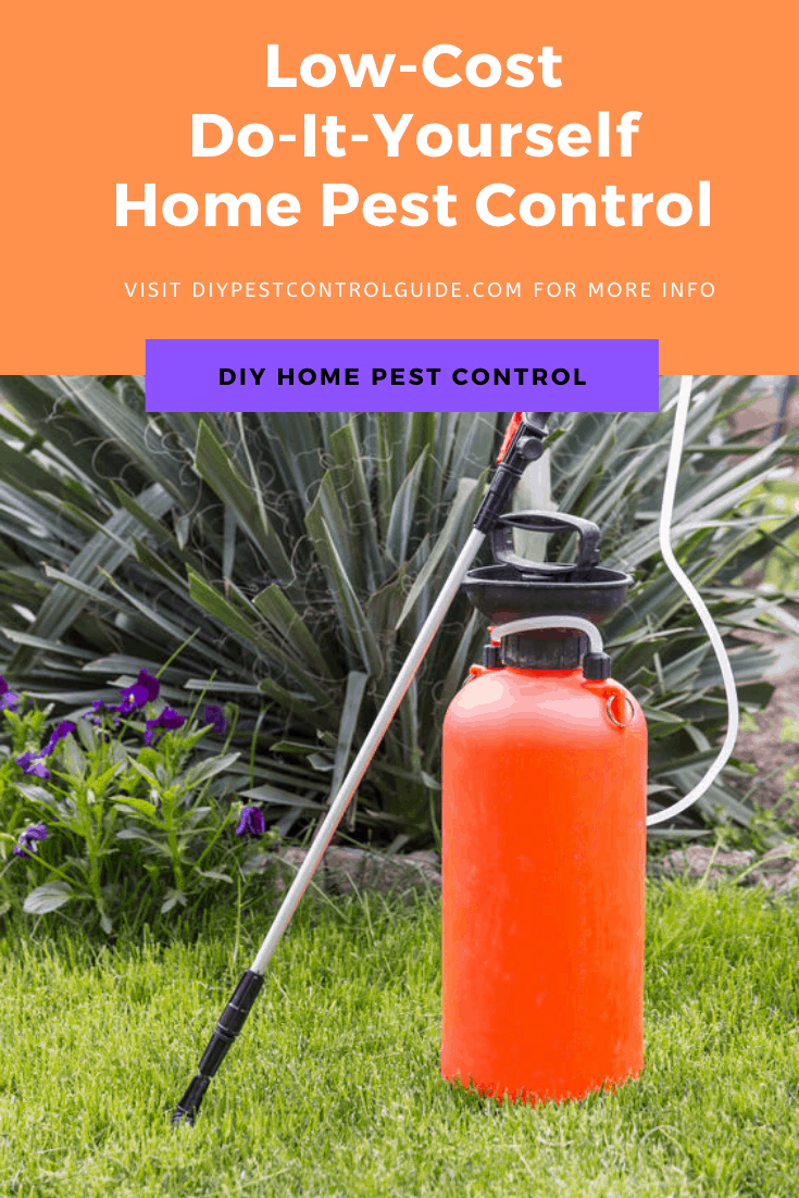 pest control for homeowners