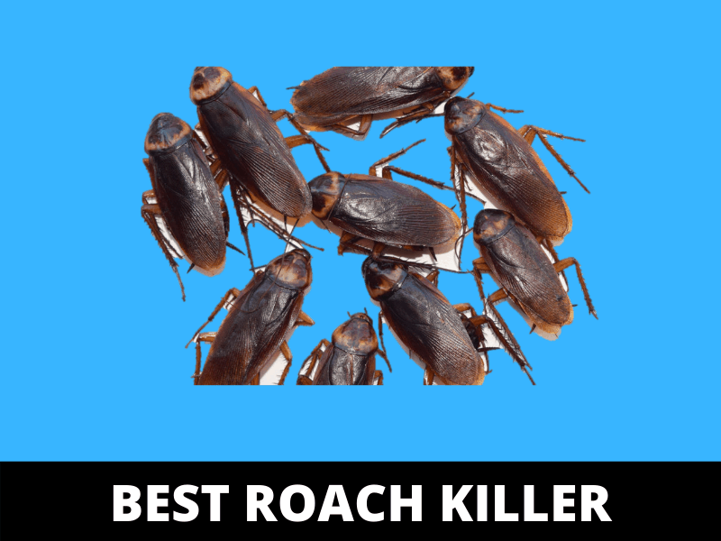 best homemade roach killer