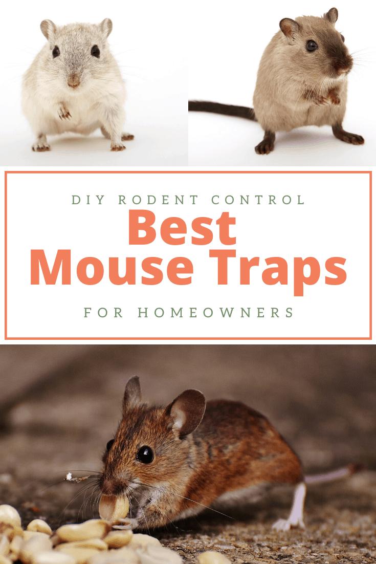 mouse snap traps