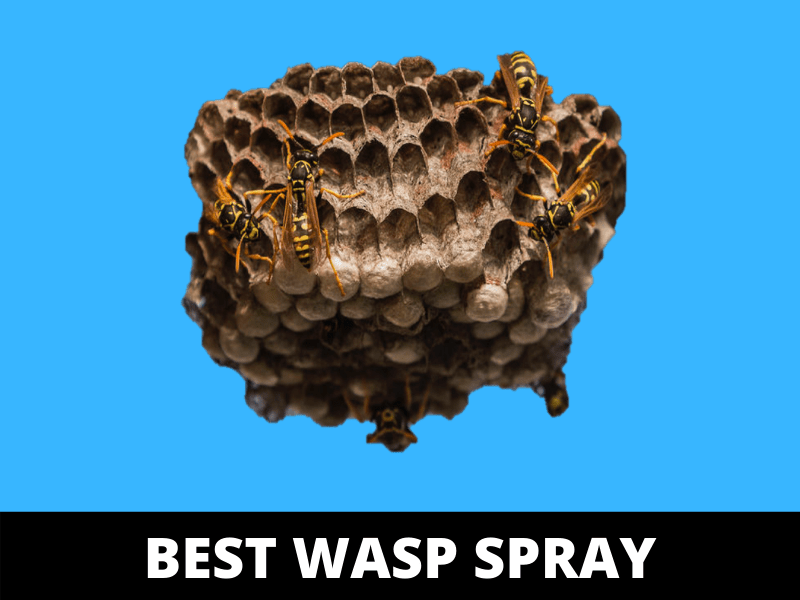 best homemade wasp killer spray