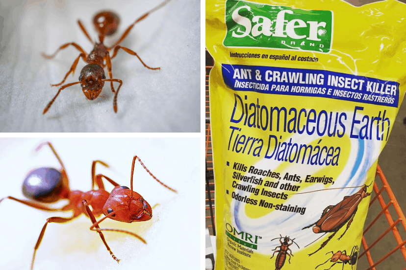 How To Use Diatomaceous Earth To Kill Ants Dead