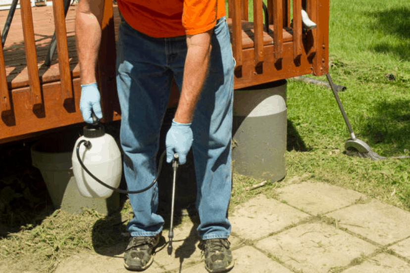 Complete DIY Guide On How To Do Your Own Pest Control