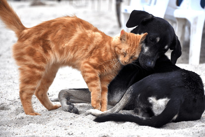 Does Diatomaceous Earth Kill Fleas On Cats And Dogs
