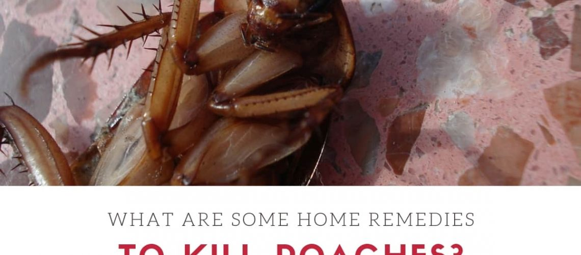 What Are Some Home Remedies To Kill Roaches